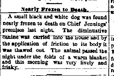 Newspaper Auburn NY Evening Auburnian 2 FEb 1881 Jennings saves dog